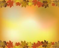 Fondo del otoño con las hojas de Marple Imagen de archivo libre de regalías