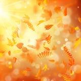 Fondo del otoño con las hojas naturales y la luz del sol brillante EPS 10 stock de ilustración