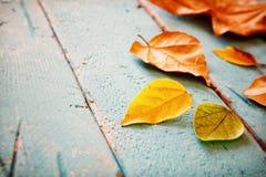 Fondo del otoño con las hojas secas en la tabla de madera Imagen de archivo