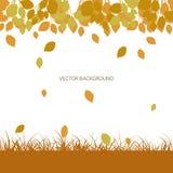 Fondo del otoño con las hojas y la hierba que caen, vector Fotos de archivo libres de regalías