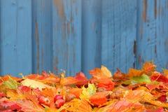 Fondo del otoño con las hojas y las pequeñas manzanas Fotos de archivo libres de regalías