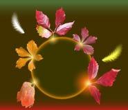 Fondo del otoño con las hojas y las plumas coloridas del vuelo Imagen de archivo