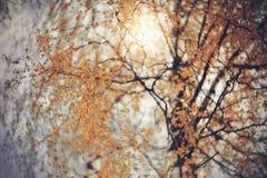 Fondo del otoño con las ramas del abedul Fotografía de archivo libre de regalías