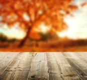 Fondo del otoño con los tablones de madera Foto de archivo libre de regalías