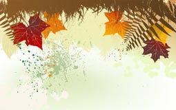 Fondo del otoño con un espacio para un texto Imágenes de archivo libres de regalías
