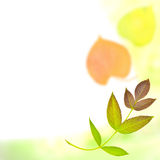 Fondo del otoño con un modelo de las hojas Imágenes de archivo libres de regalías