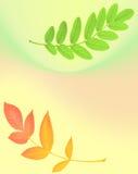 Fondo del otoño con un modelo de las hojas Foto de archivo libre de regalías