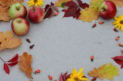 Fondo del otoño con un piel-árbol para el texto Foto de archivo