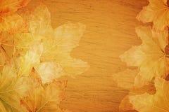 Fondo del otoño de la caída Imagenes de archivo