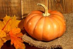 Fondo del otoño de la calabaza de la acción de gracias Fotos de archivo libres de regalías