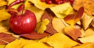 Fondo del otoño de las hojas amarillas, manzanas, calabaza Temporada de otoño, comida del eco y concepto de la cosecha Foto de archivo