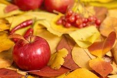 Fondo del otoño de las hojas amarillas, manzanas, calabaza Temporada de otoño, comida del eco y concepto de la cosecha Imágenes de archivo libres de regalías