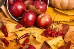 Fondo del otoño de las hojas amarillas, manzanas, calabaza Temporada de otoño, comida del eco y concepto de la cosecha Imagen de archivo libre de regalías