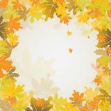 Fondo del otoño del arce, vector Imágenes de archivo libres de regalías