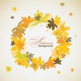 Fondo del otoño del arce, vector Imagen de archivo libre de regalías