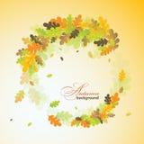 Fondo del otoño del roble, vector Imagen de archivo