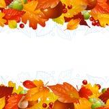 Fondo del otoño del vector con la hoja de la caída Fotografía de archivo