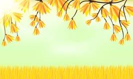 Fondo del otoño Hierba y hojas Imagen de archivo libre de regalías