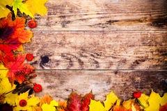 Fondo del otoño, hojas coloridas del árbol Foto de archivo libre de regalías