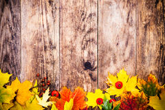 Fondo del otoño, hojas coloridas del árbol Imagen de archivo libre de regalías