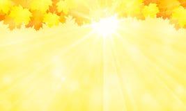 Fondo del otoño Hojas de arce amarillas y el sol Foto de archivo