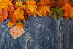 Fondo del otoño/hojas de otoño sobre fondo de madera Foto de archivo libre de regalías