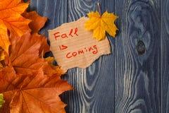 Fondo del otoño/hojas de otoño sobre fondo de madera Foto de archivo