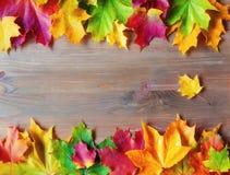 Fondo del otoño Hojas de otoño varicolored del arce en el fondo de madera fotos de archivo