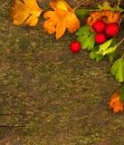 Fondo del otoño Hojas y baya de otoño sobre backgroun de madera Foto de archivo