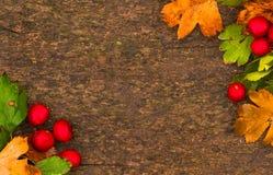 Fondo del otoño Hojas y baya de otoño sobre backgroun de madera Fotografía de archivo