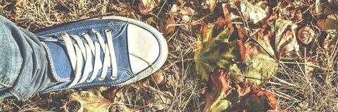 Fondo del otoño Piernas en los zapatos de gimnasio azules que se colocan en las hojas caidas coloridas Concepto: tomar decisiones Imagen de archivo libre de regalías