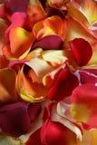 Fondo del pétalo de Rose Imagen de archivo