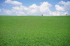 Fondo del paesaggio del prato Fotografie Stock
