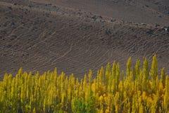 Fondo del paesaggio della sporcizia e priorità alta degli alberi di pioppo Il Pakistan del Nord Fotografia Stock