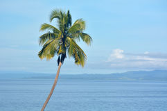 Fondo del paesaggio di una palma tropicale Immagini Stock