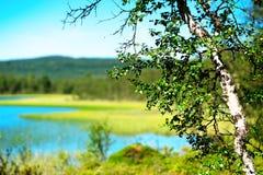 Fondo del paisaje del lago del bokeh del árbol de abedul Foto de archivo