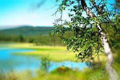 Fondo del paisaje del lago del bokeh del árbol de abedul Imagen de archivo libre de regalías