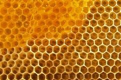 Fondo del panal con la miel Imagenes de archivo