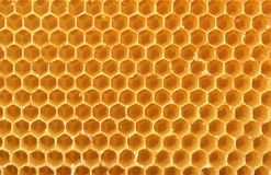 Fondo del panal sin la miel Foto de archivo libre de regalías