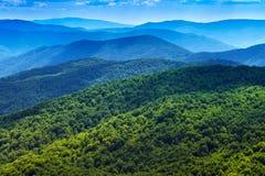 Fondo del panorama de las montañas del bosque de Cárpatos Foto de archivo libre de regalías