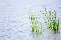 Fondo del pantano Fotos de archivo libres de regalías