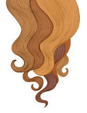 Fondo del pelo Diseño del marco del salón de la peluquería del color Imagenes de archivo