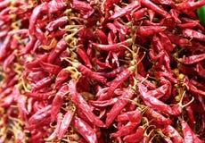 Fondo del pepe della paprica Fotografia Stock