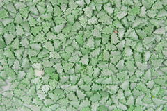 Fondo del pequeño piel-árbol Imagen de archivo libre de regalías