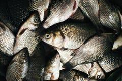 Fondo del pesce del fiume Immagine Stock