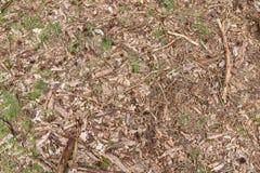 Fondo del piso del bosque con los conos de los pedazos de madera, de las puntillas, de las hojas, de la hierba y del pino Fotos de archivo libres de regalías