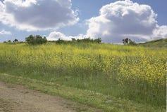 Fondo del prado con el cielo y la hierba Fotografía de archivo