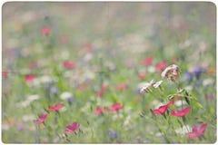 Fondo del prado del Wildflower Imagen de archivo libre de regalías