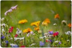 Fondo del prado del Wildflower Imágenes de archivo libres de regalías