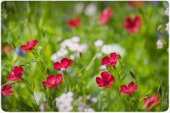 Fondo del prado del Wildflower Imagen de archivo